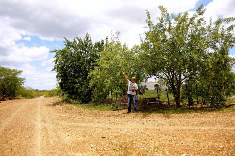 Pesquisa aponta uso de planta da Caatinga para reabilitação de áreas desertificadas